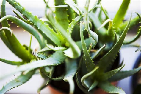 10 Common Houseplants and How to Take Care of Them - ZING