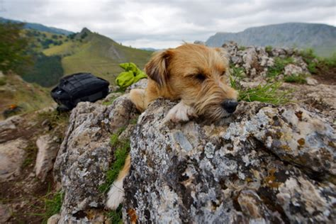 Somerset's Dog Friendly Holiday Guide | Independent Cottages