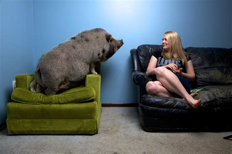 The Big Problem With Mini-Pigs