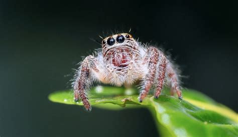 How to build recurring web spider jobs using Scrapy