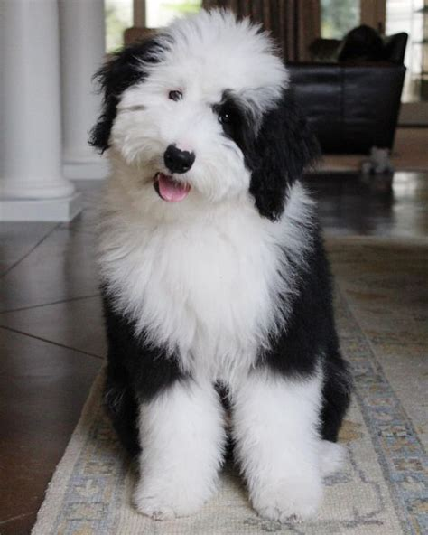 So fluffy and fabulous | ADORABLE ANIMALS | Dogs, Old