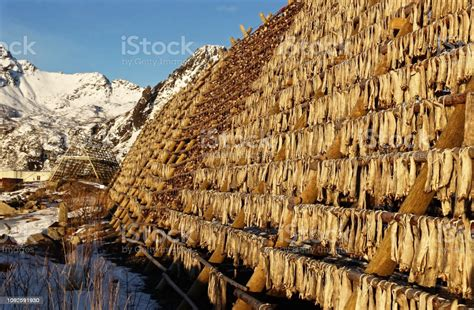 The Stockfish Industry In Svolvaer Stock Photo - Download