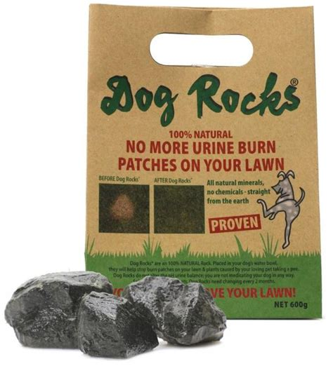 Two Approaches To Preventing Dog Pee Spots On Your Lawn