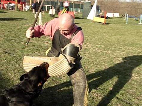 rottweiler attack ipo training - YouTube