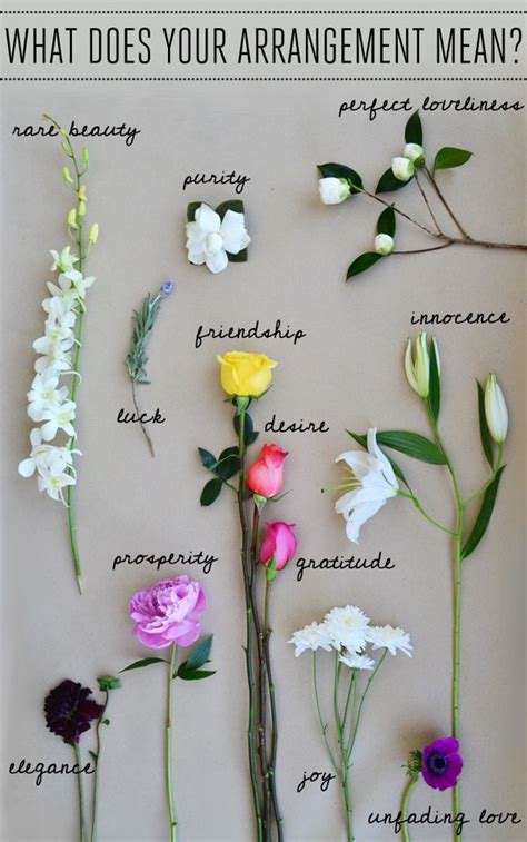 flower-symbolism-meaning-peonies-bouquet | Plants and
