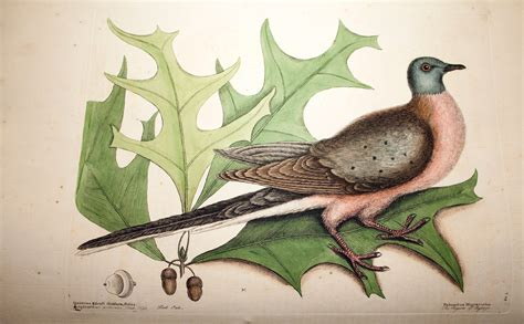 Mark Catesby and his enduring legacy | Zoological Society