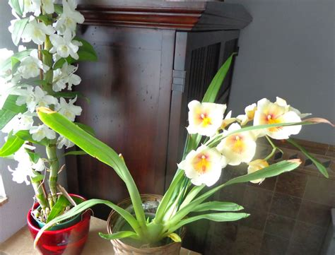 Growing Greener in the Pacific Northwest: Orchid Progress