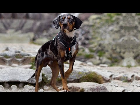 1000+ images about dogs on Pinterest | Guard dog, Rare dog